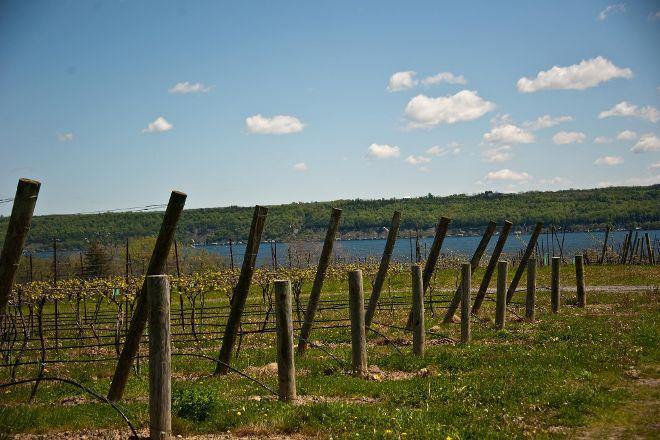 Sheldrake Point Cayuga Lake Winery, Ovid, United States