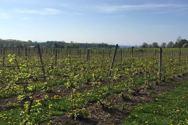 Snow Farm Vineyard and Winery, South Hero, United States