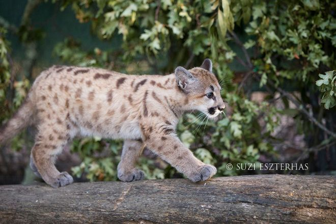 Sonoma County Wildlife Rescue, Petaluma, United States