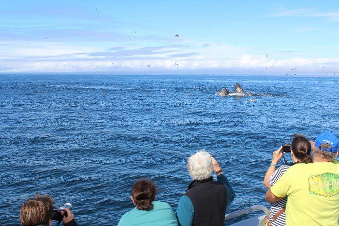 Stagnaro Sport Fishing Charters & Whale Watching Cruises, Santa Cruz, United States
