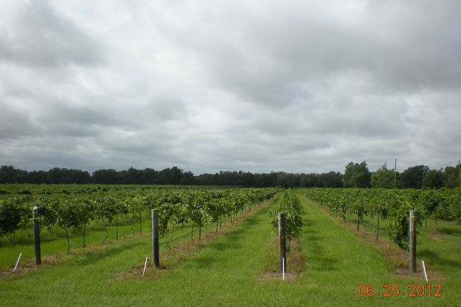 Strong Tower Vineyard, Spring Hill, United States
