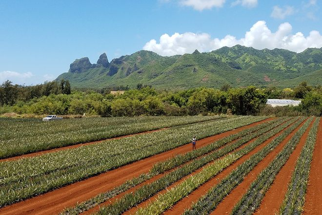 Sugarloaf Pineapple Farm, Kilauea, United States