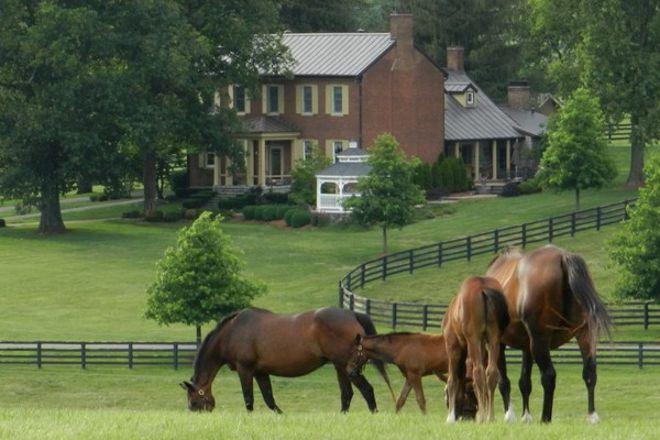 Sun Valley Farm, Versailles, United States