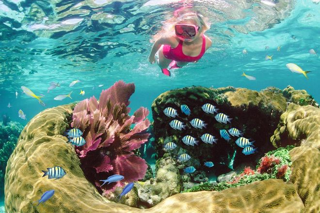 Sundiver Snorkeling Tours, Key Largo, United States
