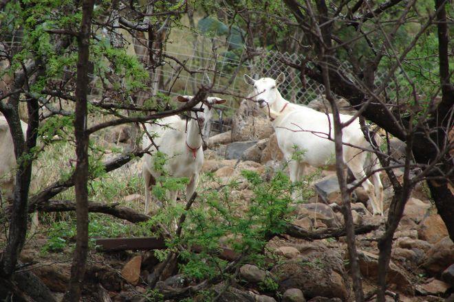 Surfing Goat Dairy, Kula, United States