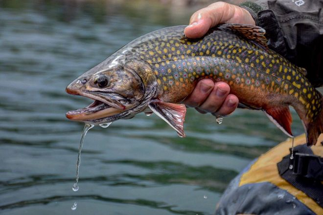 Taylor Creek Fly Fishing Shop, Basalt, United States