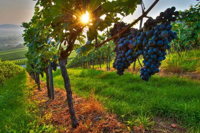 Texas Wine Tours, Fredericksburg, United States