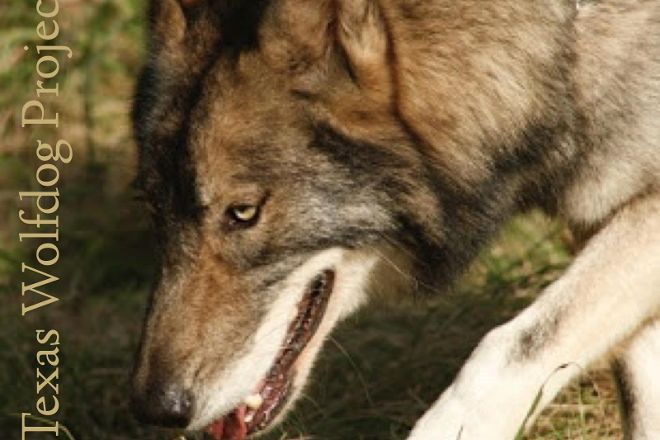 Texas Wolfdog Project, Montgomery, United States