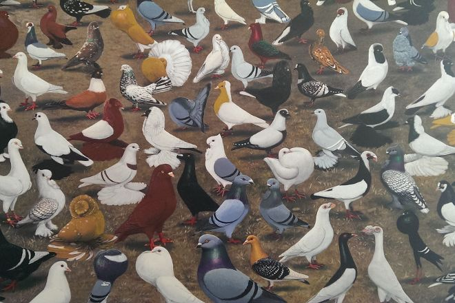 The American Pigeon Museum & Library, Oklahoma City, United States
