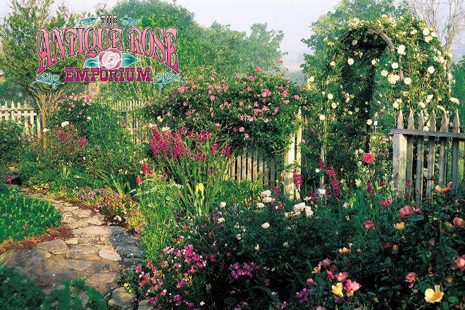 Antique Rose Emporium, Brenham, United States