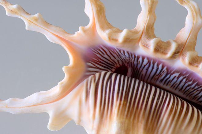 The Bailey-Matthews National Shell Museum, Sanibel Island, United States
