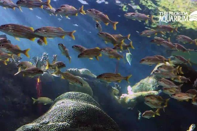 The Florida Aquarium, Tampa, United States