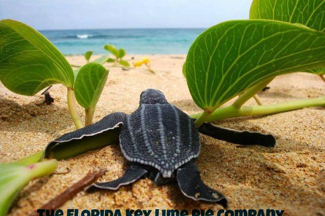 The Florida Key Lime Pie Company, Cocoa Beach, United States