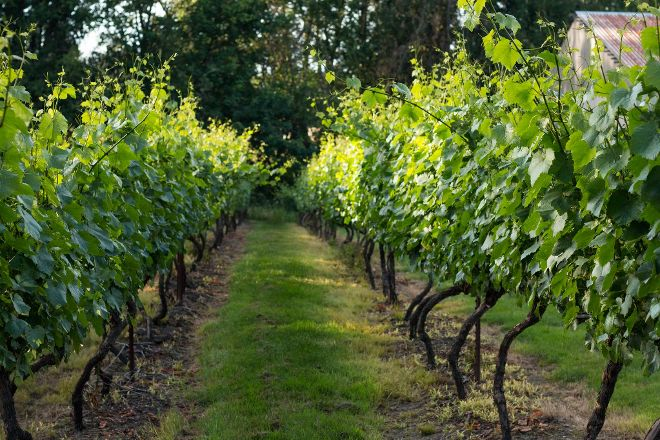Three Brothers Vineyard and Winery, Ridgefield, United States