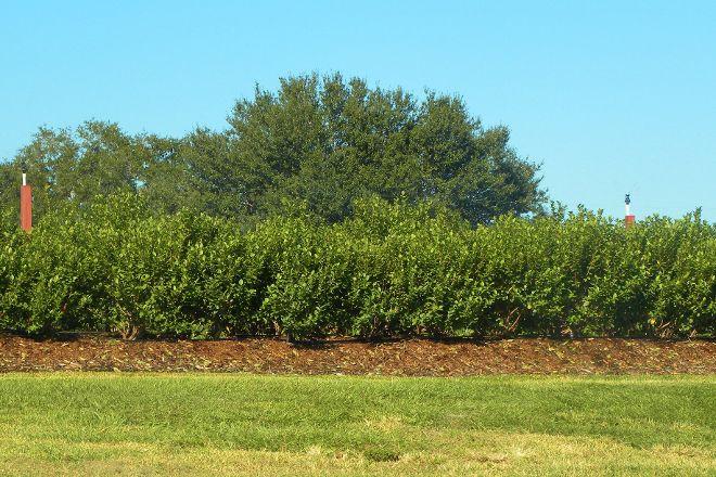 Tom West Blueberries, Ocoee, United States