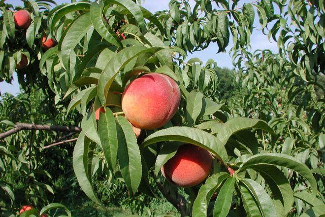 Tree-Mendus Fruit, Eau Claire, United States