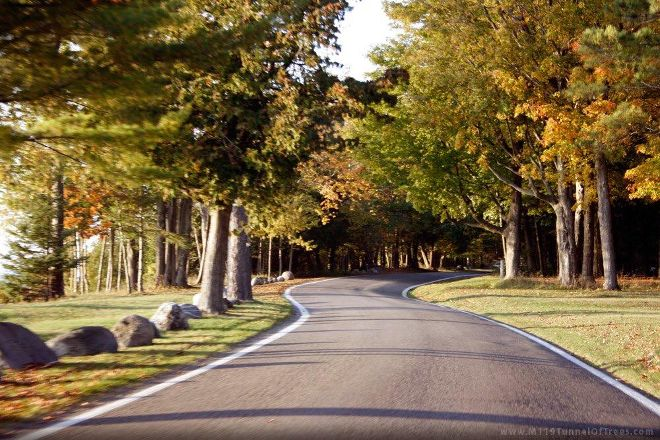 Tunnel of Trees - M119, Harbor Springs, United States