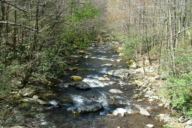 Upper Tremont Road in Great Smoky Mountains National Park, Great Smoky Mountains National Park, United States