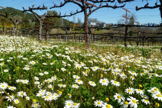 Valet of the Moon Wine Tours, Sonoma, United States