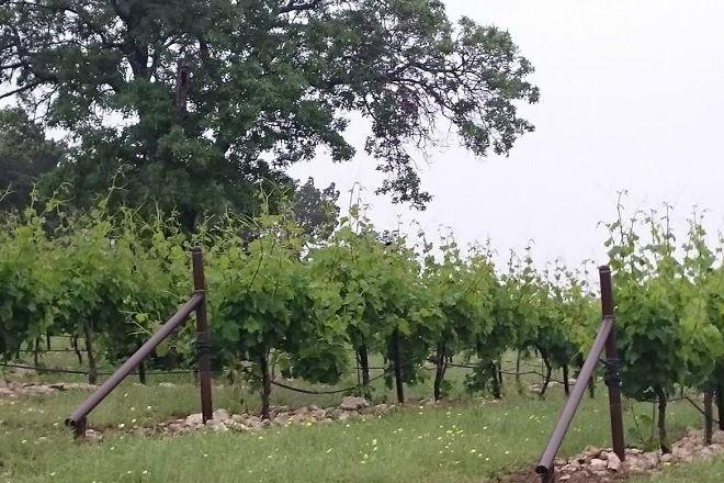 Valley Mills Vineyards, Waco, United States