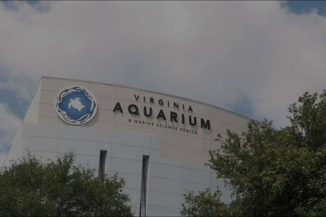Virginia Aquarium & Marine Science Center, Virginia Beach, United States