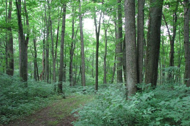 Warriors' Path State Park, Kingsport, United States
