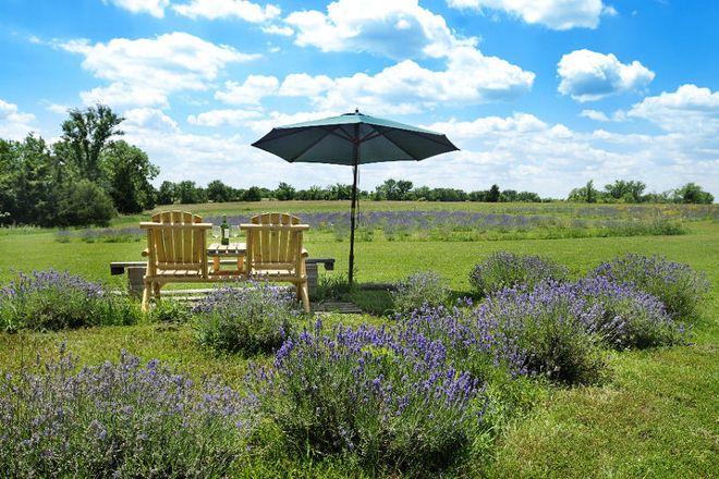 Washington Creek Lavender, Lawrence, United States