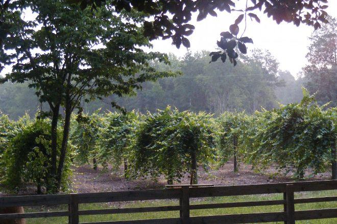 Watermelon Creek Vineyard, Glennville, United States
