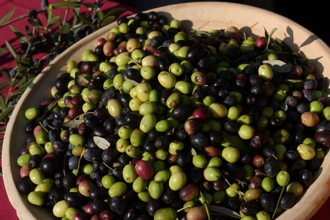 We Olive, Paso Robles, United States