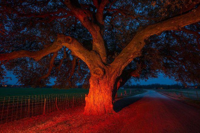 Wedding Oak Winery, San Saba, United States