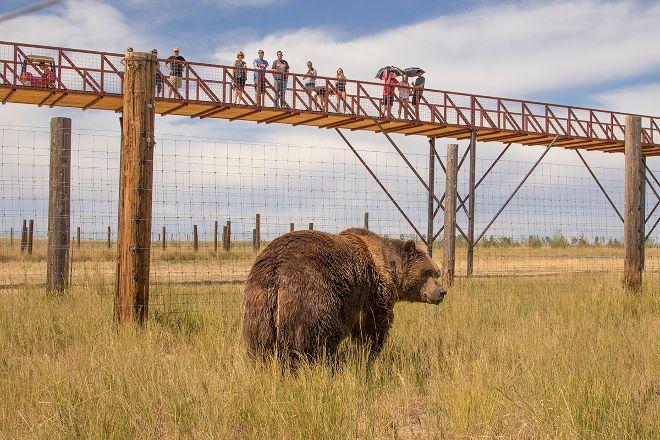 The Wild Animal Sanctuary, Keenesburg, United States