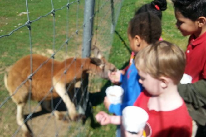 Wild Country Safari Park, Epps, United States
