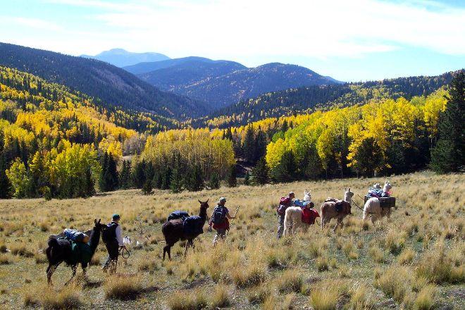 Wild Earth Llama Adventures, Taos, United States