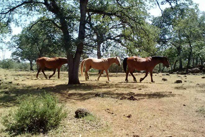 Wild Horse Sanctuary, Shingletown, United States