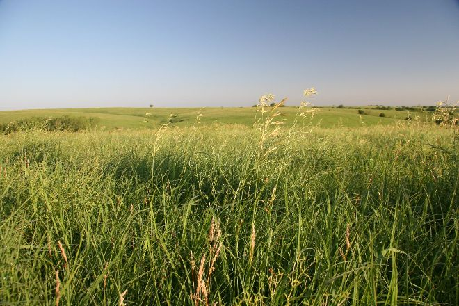 Willa Cather Memorial Prairie, Red Cloud, United States