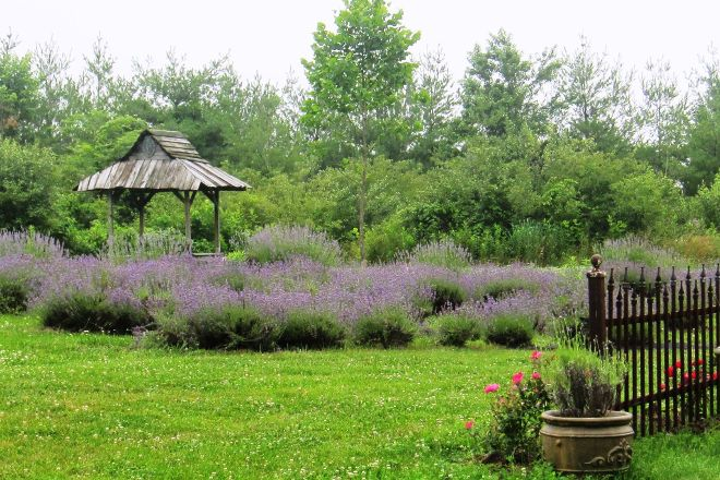 Willowfield Lavender Farm, Mooresville, United States