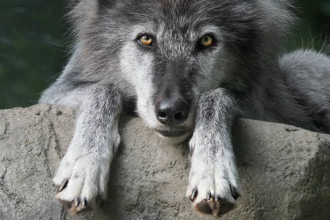 Wolf Conservation Center, South Salem, United States