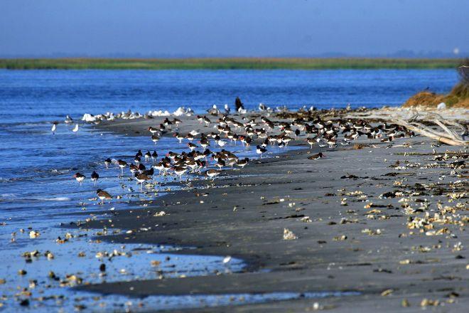 Wolf Island National Wildlife Refuge, Darien, United States