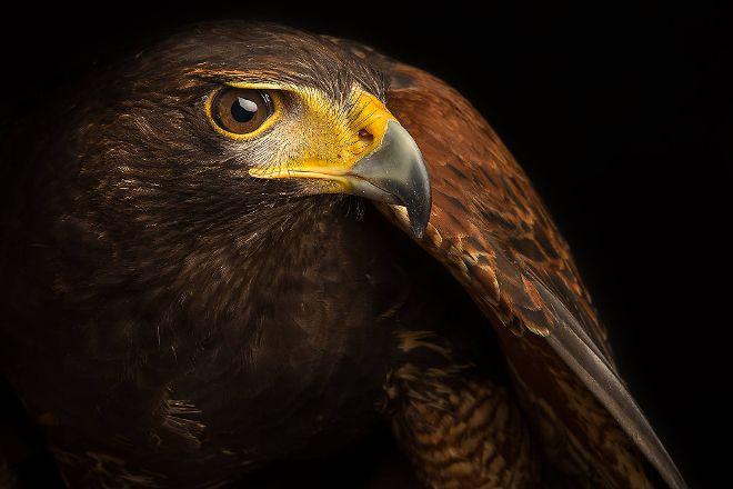 World Bird Sanctuary, Valley Park, United States