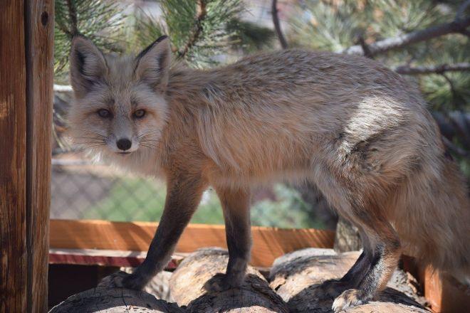 Yellowstone Wildlife Sanctuary, Red Lodge, United States