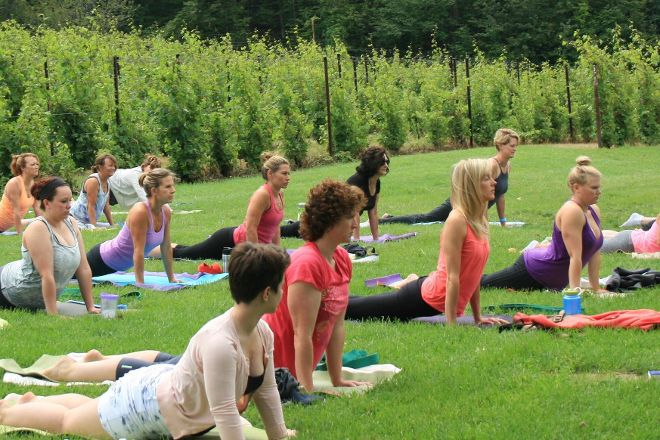 Yoga in the Vines, Traverse City, United States