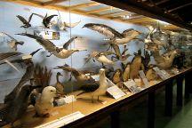 Museo del Mar, Punta del Este, Uruguay