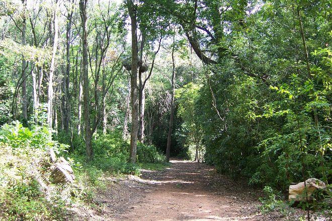 Arboretum Lussich, Punta del Este, Uruguay