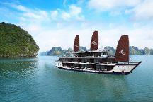 Arcady Cruise