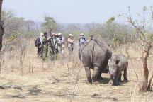Livingstone Rhino Safaris