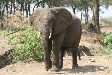 Lower Zambezi National Park, Lusaka, Zambia