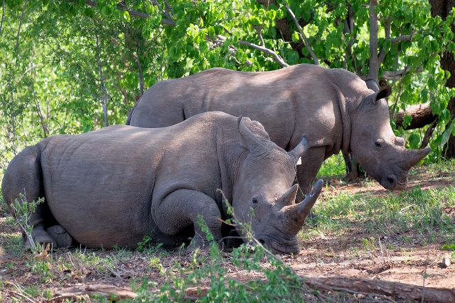 Afrizim Rhino Walk - Mosi Oa Tunya Park, Livingstone, Zambia
