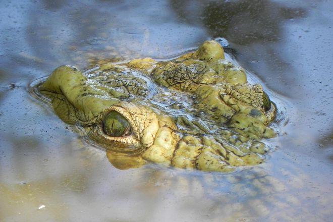 Livingstone Crocodile Park, Livingstone, Zambia