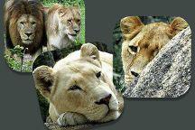 Lion and Cheetah Park, Harare, Zimbabwe