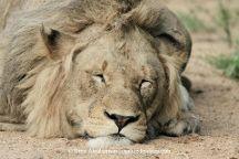 ThisAndThat Safaris, Bulawayo, Zimbabwe